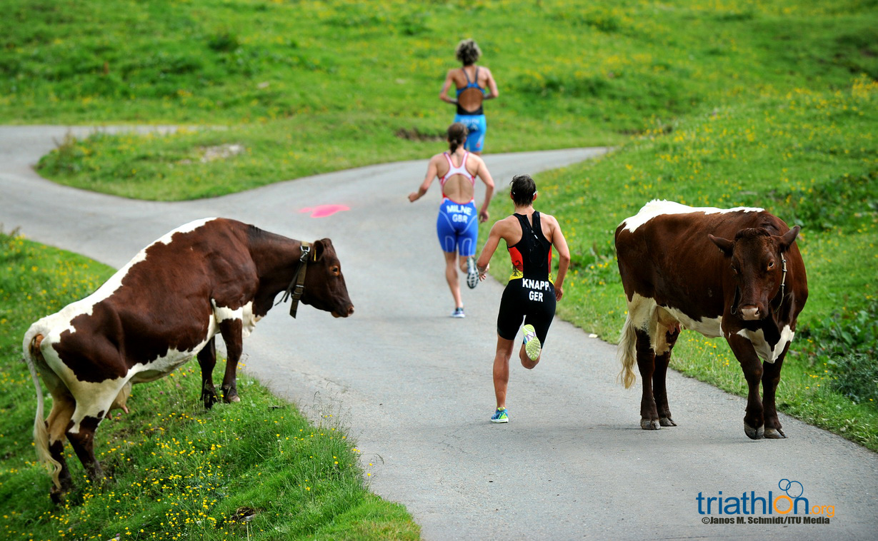 2013 WTS KITZ Cows and runners