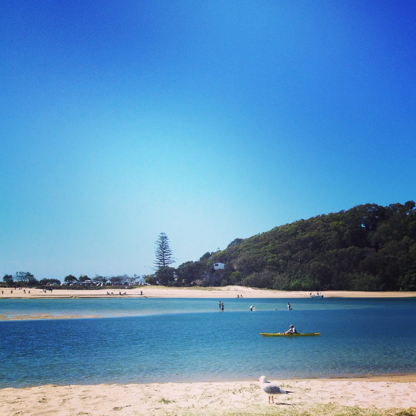 Wildthing Race Currumbin